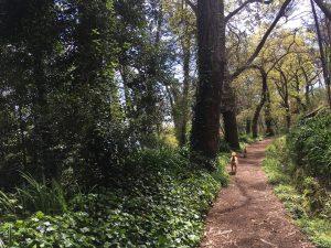 Levada Wanderungen Vale Paraíso