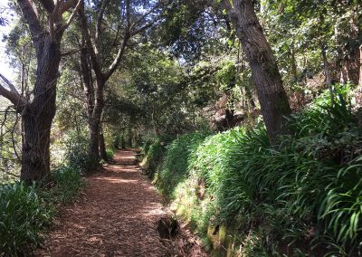 13 – Levada Wanderungen Vale Paraíso 3