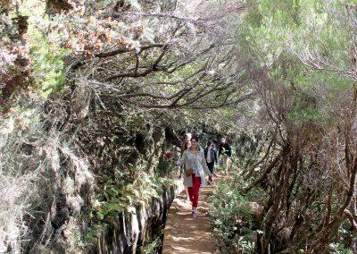 8 – Levada Madeira Lakes 3