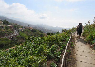 Levada Wanderungen Estreito
