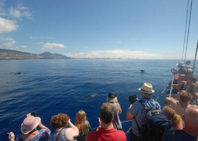 Schöne Buchten von Bonita da Madeira 6