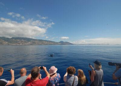 Schöne Buchten von Bonita da Madeira 4