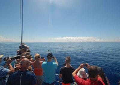 Schöne Buchten von Bonita da Madeira 3