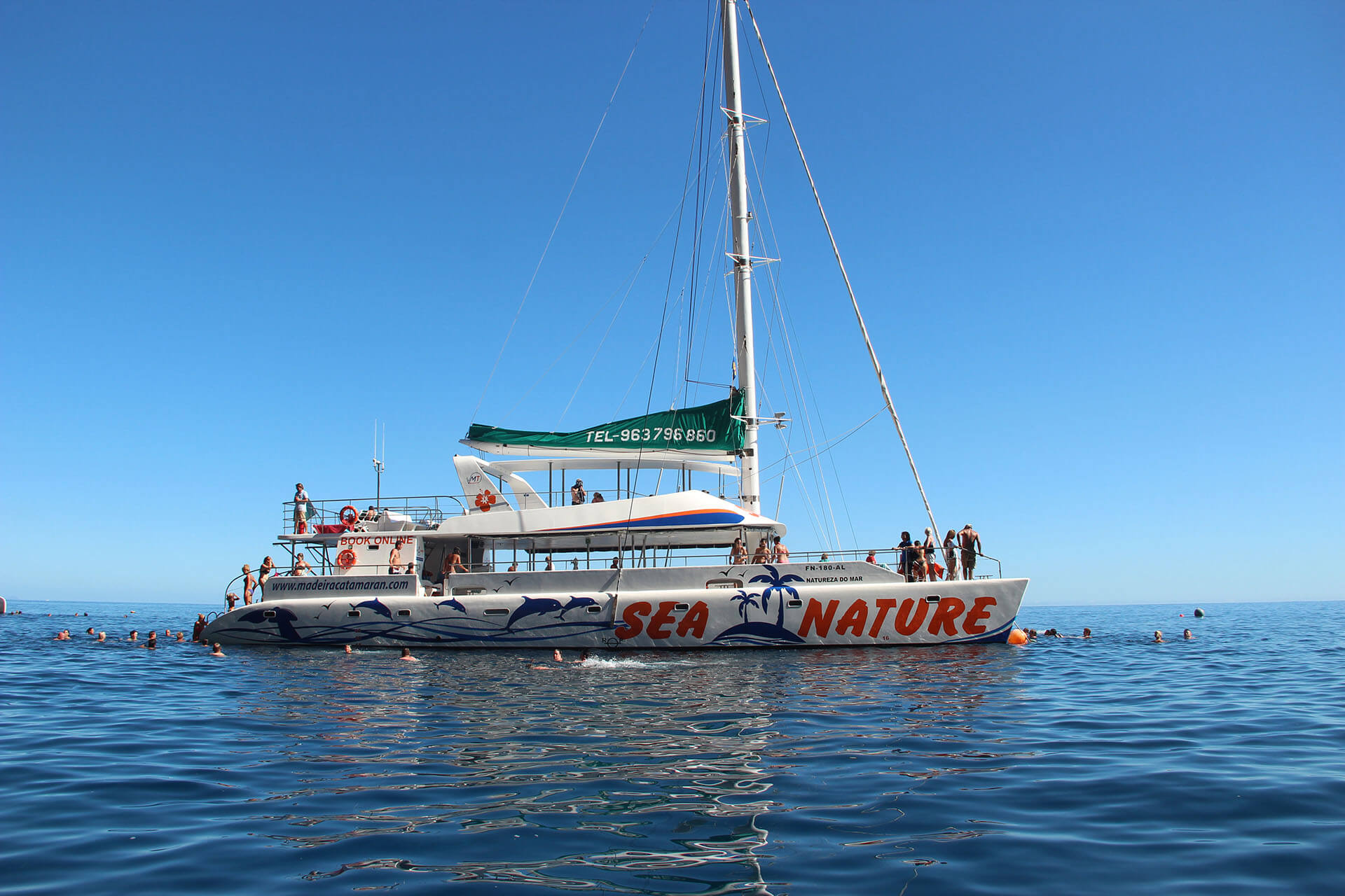 Dolphin and Whale Watching by VMT Catamaran 7