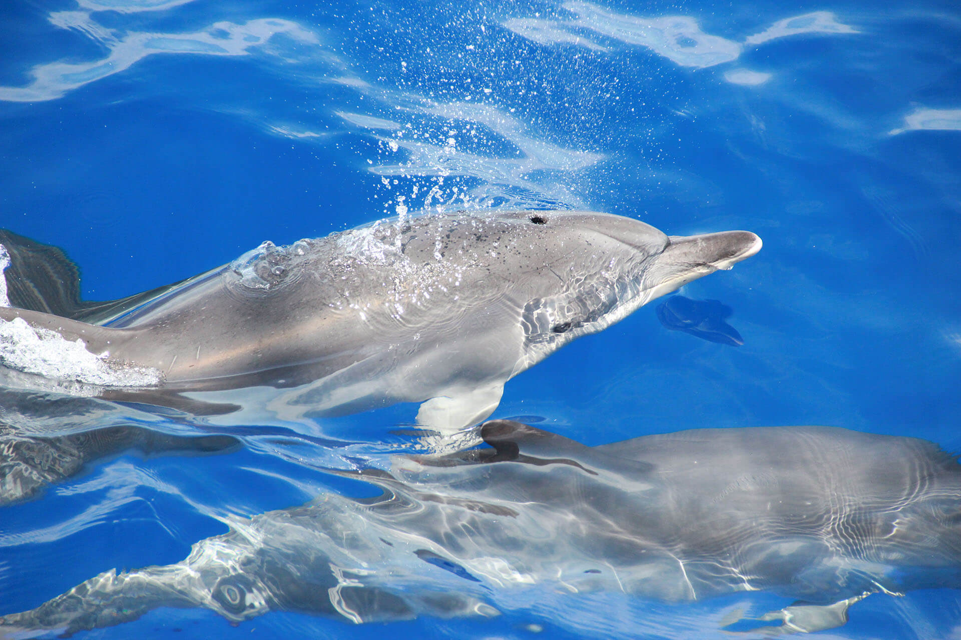 Dolphin and Whale Watching by VMT Catamaran 4