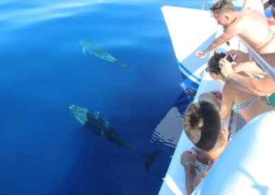 Dolphin and Whale Watching by VMT Catamaran 3