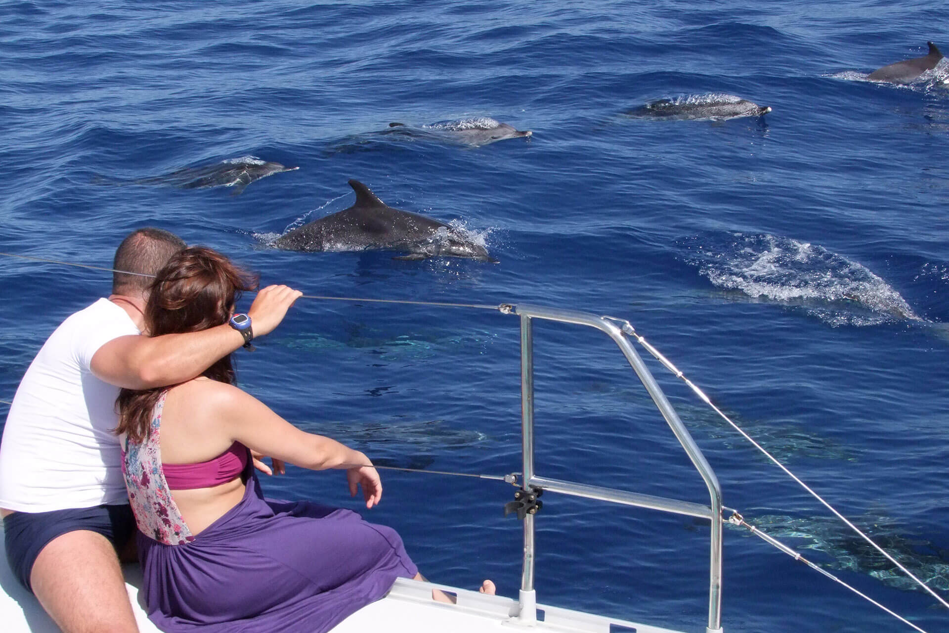 Dolphin and Whale Watching by VMT Catamaran 2