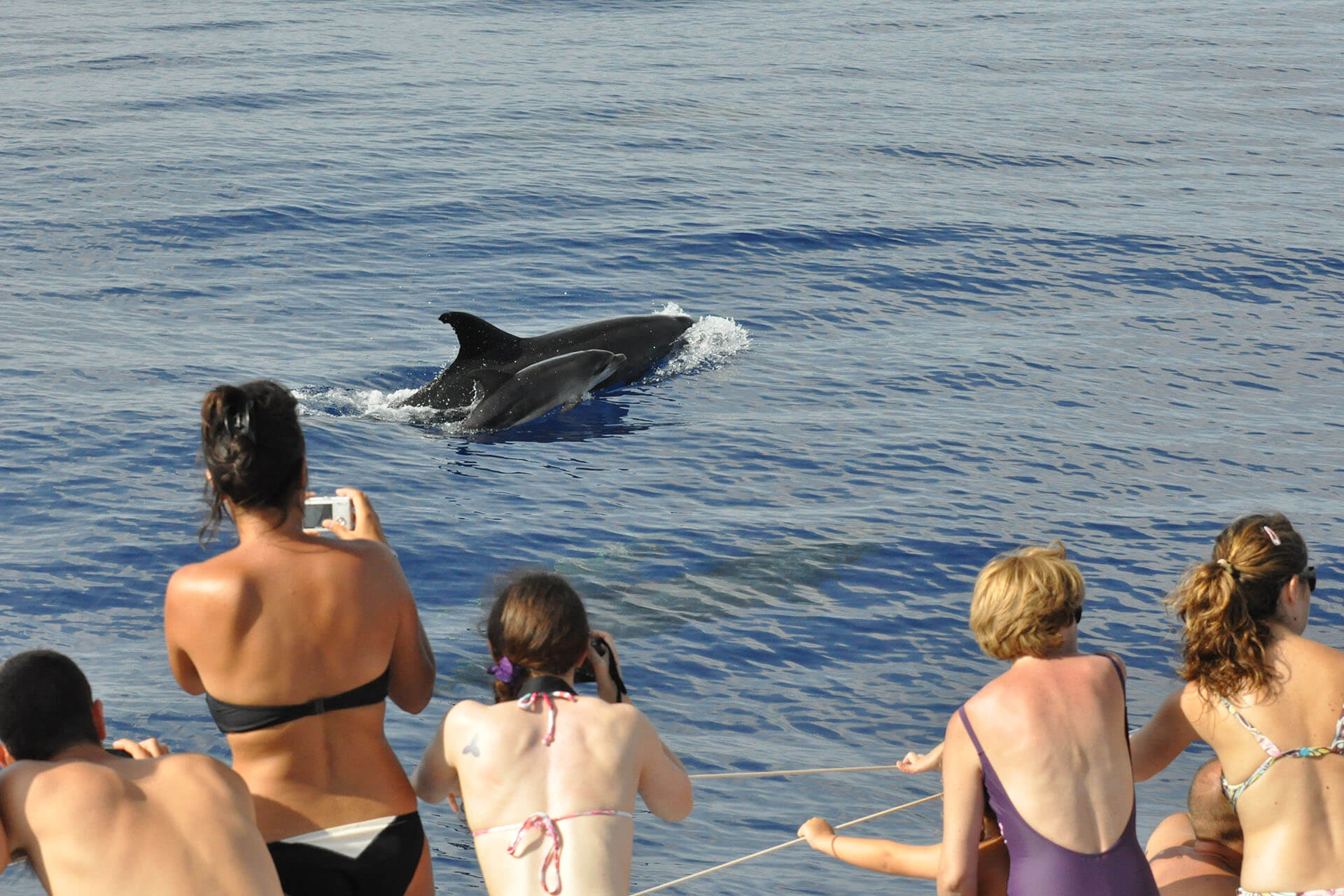 Dolphin and Whale Watching by VMT Catamaran 1