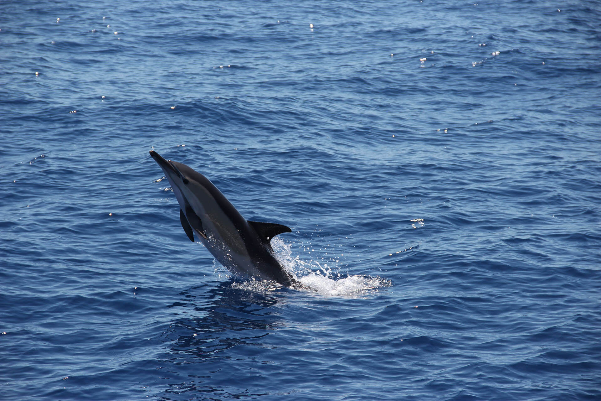 Dolphin and Whale Watching by VMT Catamaran 10