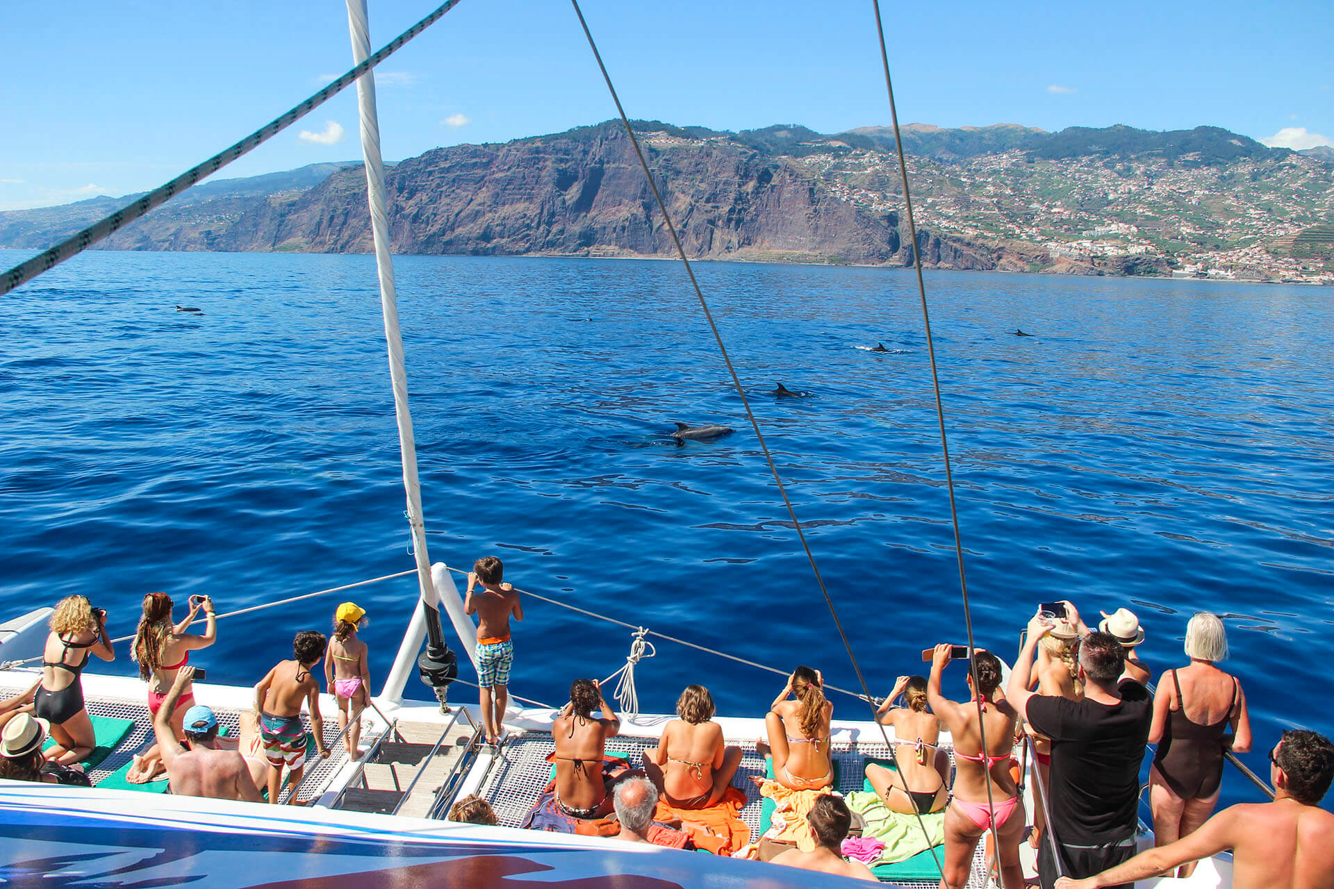 Dolphin and Whale Watching by VMT Catamaran 9