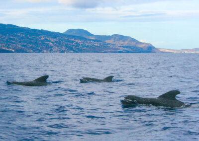 Seesafari von Magic Dolphin 1