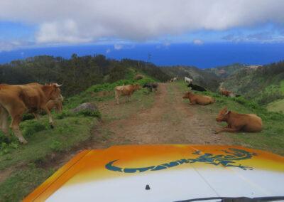 4x4 Jeep Safari Südwesten - Craters of Fire 8