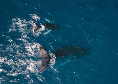 Golfinhos e Baleias com a Bonita da Madeira 2