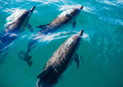 Dolphins and Whales by Bonita da Madeira 1