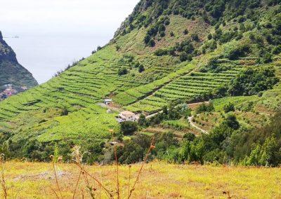 Excursão Vinho Madeira com Almoço Vinícola 7