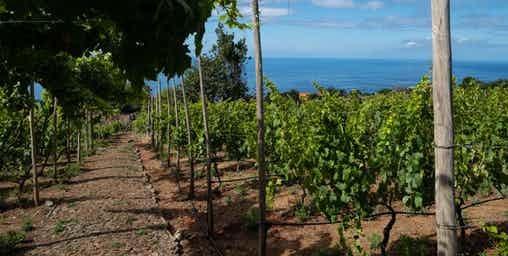 Excursão Vinho Madeira com Almoço Vinícola 4
