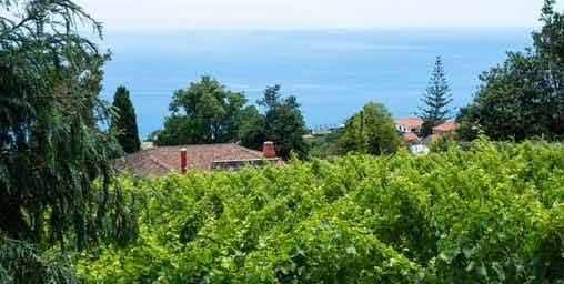 Excursão Vinho Madeira com Almoço Vinícola 2