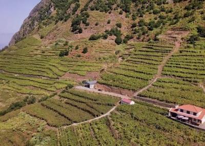 Excursão Vinho Madeira com Almoço Vinícola 1