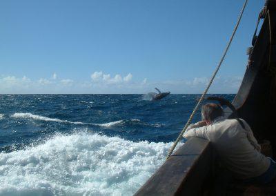 Santa Maria de Colombo Sailing Trips 5