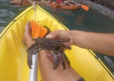 Kayak to Câmara de Lobos 16